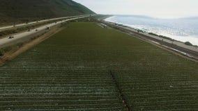 Vuelo del helicóptero sobre el campo de maíz cerca de la carretera y de la Costa del Pacífico almacen de video