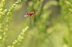 Vuelo del insecto Imagen de archivo libre de regalías