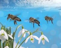 Vuelo del mellifera de tres apis de las abejas Imágenes de archivo libres de regalías