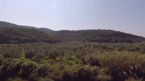 Vuelo del olivo almacen de video