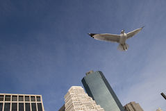 Vuelo del pájaro   Imagen de archivo libre de regalías