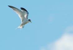 Vuelo del pájaro Imagenes de archivo