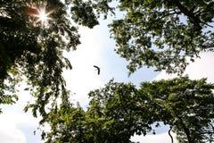Vuelo del pájaro Fotografía de archivo