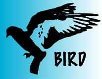 Vuelo del pájaro Imágenes de archivo libres de regalías