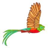 Vuelo del pájaro de quetzal Imagenes de archivo