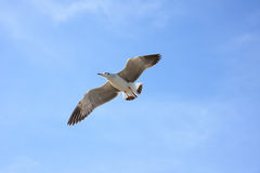 Vuelo del pájaro en cielo azul Foto de archivo