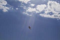Vuelo del pájaro en el cielo Foto de archivo