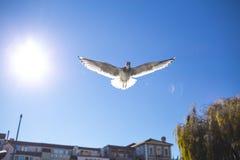 Vuelo del pájaro en el cielo Foto de archivo libre de regalías