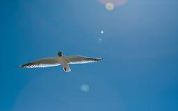Vuelo del pájaro en el desierto Imagen de archivo libre de regalías