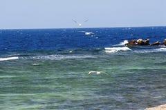 Vuelo del pájaro en el océano Foto de archivo libre de regalías