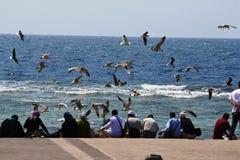 Vuelo del pájaro en el océano Fotos de archivo libres de regalías