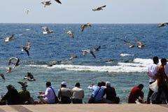 Vuelo del pájaro en el océano Fotografía de archivo