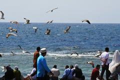 Vuelo del pájaro en el océano Imagenes de archivo
