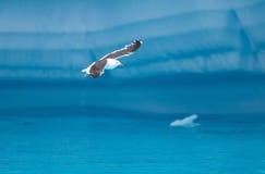 Vuelo del pájaro entre los icebergs Fotografía de archivo