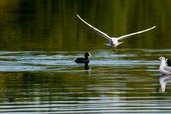 Vuelo del pájaro hacia Fotografía de archivo