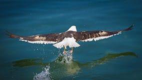 Vuelo del pájaro sobre el océano imagen de archivo