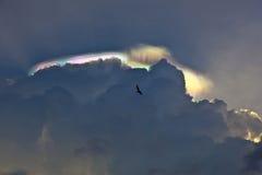 Vuelo del pelícano bajo las nubes oscuras con el arco iris Foto de archivo libre de regalías