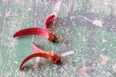 Vuelo del roxb del alatus de Dipterocapus en piso fotografía de archivo libre de regalías