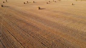Vuelo diagonal sobre las balas redondas de paja en el campo después de cosechar trigo almacen de metraje de vídeo
