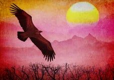 Vuelo en la puesta del sol Fotografía de archivo libre de regalías