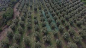 Vuelo en los árboles durante la cosecha anual almacen de metraje de vídeo
