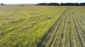 Vuelo encima de la hierba cortada en franjas y del prado al tractor almacen de video