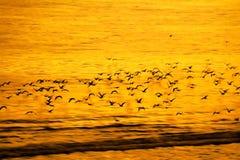 Vuelo lento de pájaros y de la toma panorámica en backgrou natural de la falta de definición de movimiento Fotografía de archivo libre de regalías