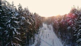 Vuelo nórdico aéreo del paisaje del invierno sobre bosque de la montaña de la nieve en puesta del sol metrajes