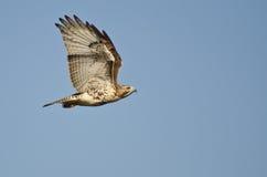 Vuelo Rojo-Atado del halcón en cielo azul fotos de archivo