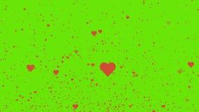 Vuelo rojo de los corazones de día de San Valentín en fondo verde 4K