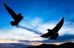 Vuelo silueteado de dos gaviotas en la puesta del sol Fotografía de archivo libre de regalías