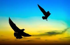 Vuelo silueteado de dos gaviotas en la puesta del sol Foto de archivo libre de regalías