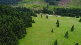 Vuelo sobre bosque en montañas almacen de video