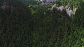 Vuelo sobre bosque en montañas metrajes