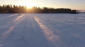 Vuelo sobre campo del invierno almacen de video