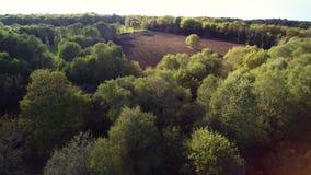 Vuelo sobre campo, 4K secuencia 2 de 2 - vuelo sobre el bosque y descubrimiento de un campo marr?n arado, pastando la luz de la t metrajes