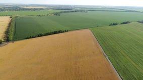 Vuelo sobre campos agrícolas verdes y amarillos en Rusia almacen de video