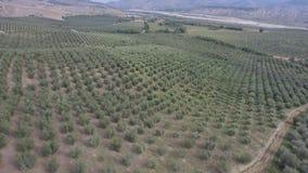 Vuelo sobre campos de la cosecha de una pequeña ciudad agrícola en Italia del sur metrajes