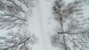 Vuelo sobre el camino cubierto con nieve Los árboles cerca del camino miran del top metrajes