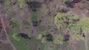 Vuelo sobre el campo con el pantano y los lagos Silueta del hombre de negocios Cowering Vídeo 4K metrajes