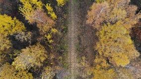Vuelo sobre el ferrocarril que pasa con el otoño del bosque Silueta del hombre de negocios Cowering El aterrizaje de la cámara 4K metrajes