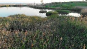 Vuelo sobre el lago grande rodeado con los campos verdes en el tiempo de la puesta del sol Charca y liman con la ca?a y las ranas almacen de video