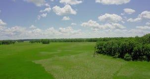 Vuelo sobre el quadcopter sobre un prado verde metrajes