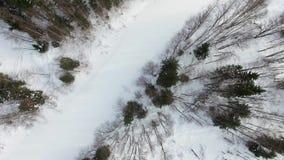 Vuelo sobre los tops de los pinos, piceas, abetos, árboles sin las hojas metrajes