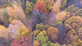 Vuelo sobre parque del otoño almacen de video