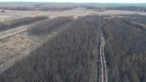 Vuelo sobre un bosque totalmente quemado del pino después de un incendio forestal grande - visión aérea almacen de video