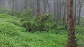 Vuelo a través de Misty Cypress Forest en el área escénica de Alishan con niebla y neblina en Taiwán Silueta del hombre de negoci almacen de metraje de vídeo