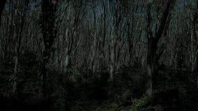 Vuelo a través del bosque del árbol en la noche metrajes