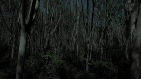 Vuelo a través del bosque del árbol en la noche almacen de metraje de vídeo