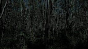 Vuelo a través del bosque del árbol en la noche almacen de video
